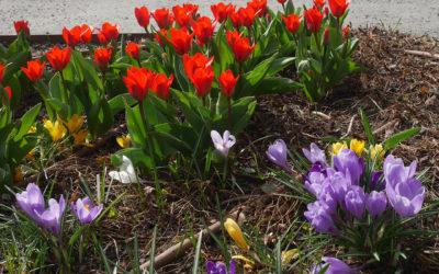 Våren har kommit